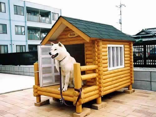 kreatív kutyaház-2